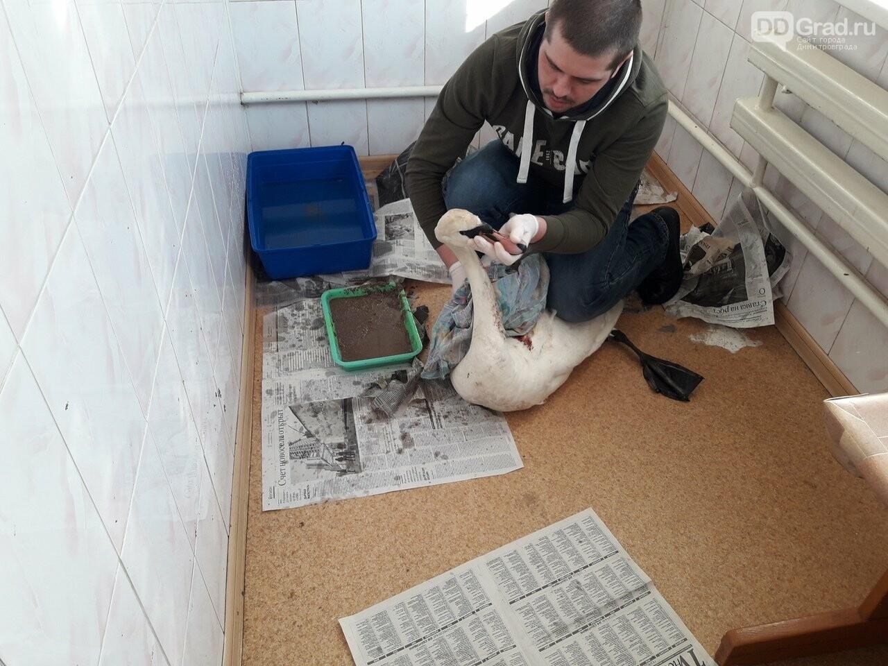 Молодой димитровградец спасает сов, филинов и хорьков. Видео, фото-2, Д. Костенко
