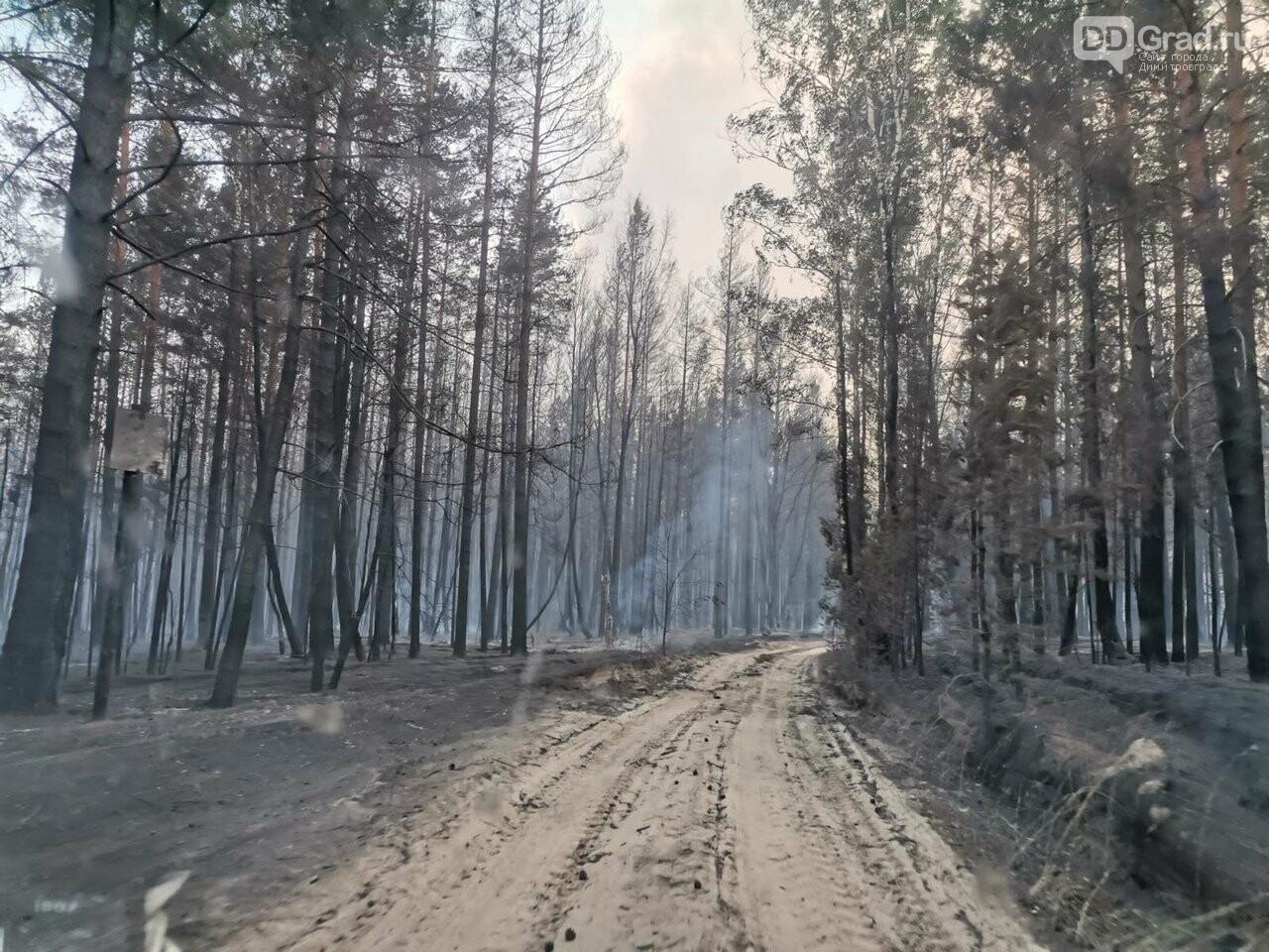 В Ульяновской области бушуют лесные пожары, фото-1