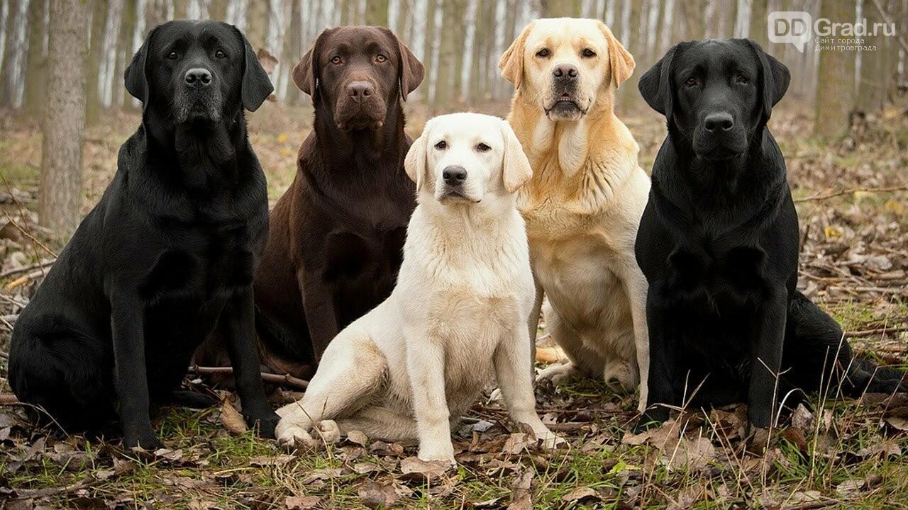 Кинологи назвали пять самых обучаемых пород собак, фото-3