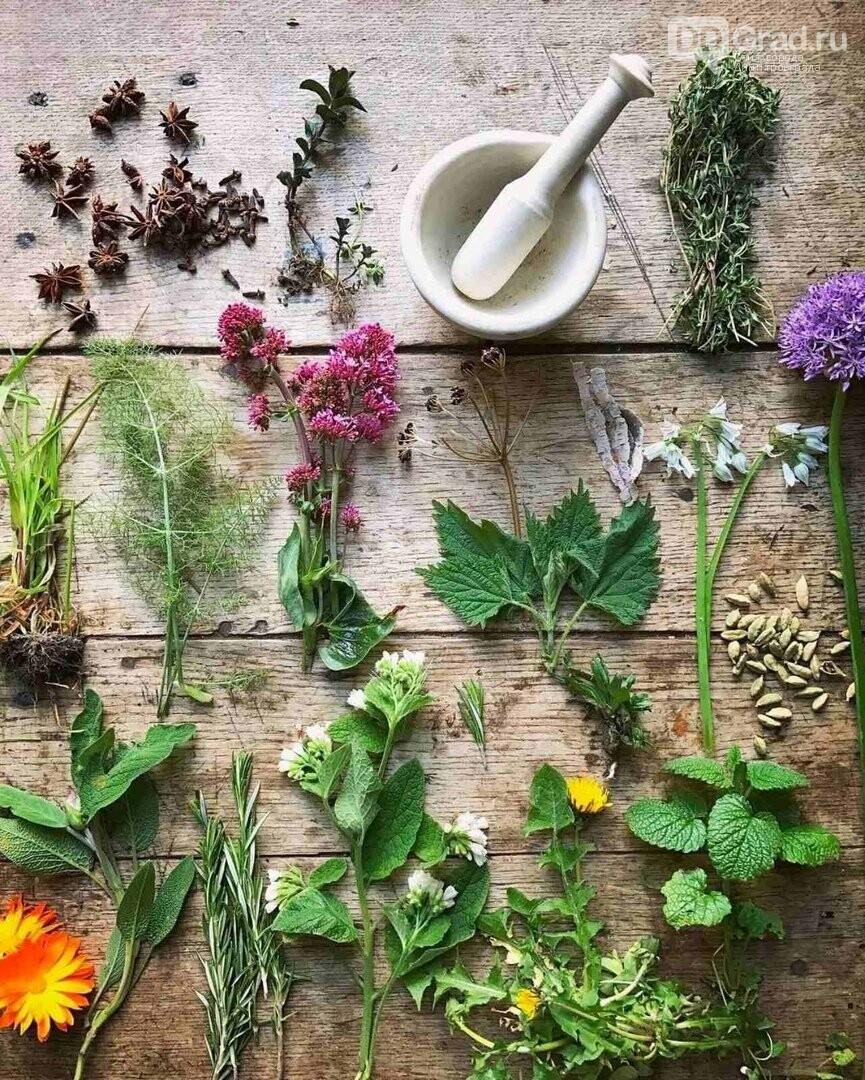 Целительная сила растений доступна для каждого, фото-1