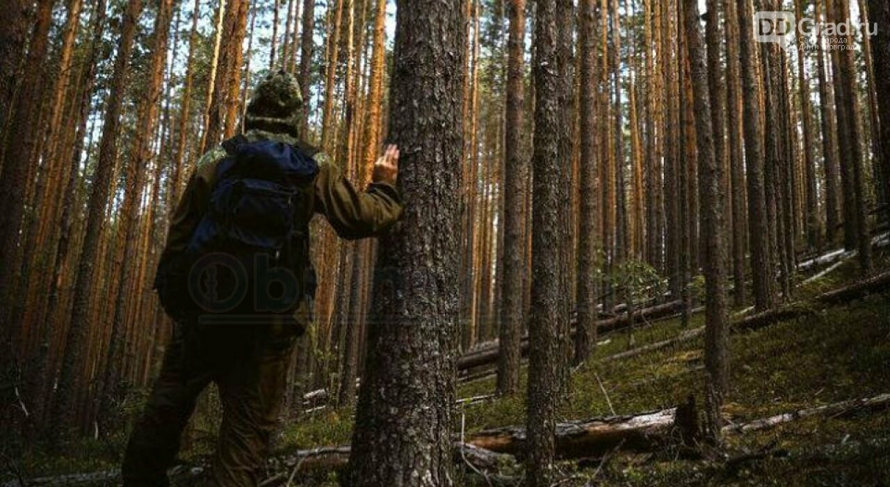 За последнюю неделю в Ульяновской области пропали два грибника, фото-1