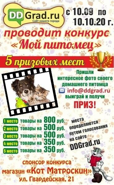 DDGrad.ru, совместно с зоомагазином «Кот Матроскин», объявляет новый фотоконкурс «Мой питомец», фото-1