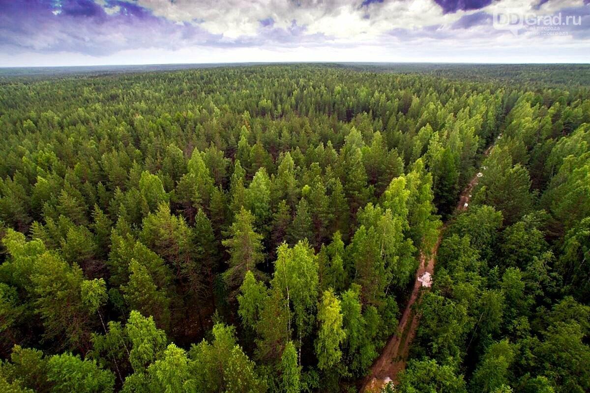 Сегодня День работников леса, фото-2