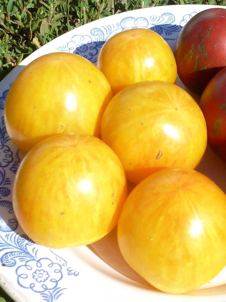 На вкус и цвет: какие сорта томатов выбрать димитровградцам, фото-3