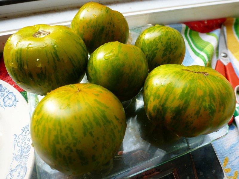 На вкус и цвет: какие сорта томатов выбрать димитровградцам, фото-12