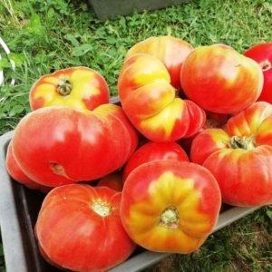 Томатная экзотика: сорта, которые могут украсить огороды димитровградцев, фото-9
