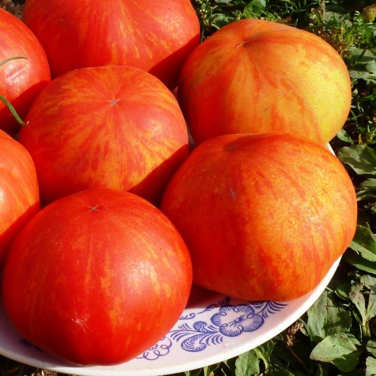 Томатная экзотика: сорта, которые могут украсить огороды димитровградцев, фото-7