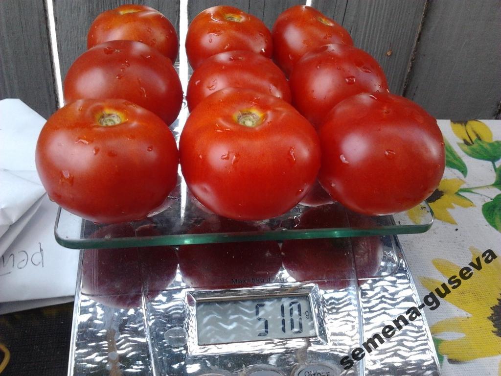 Томатная экзотика: сорта, которые могут украсить огороды димитровградцев, фото-17